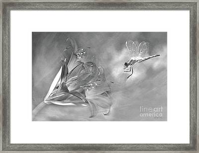 The Dragonfly And The Flower Framed Print by Linda Lees