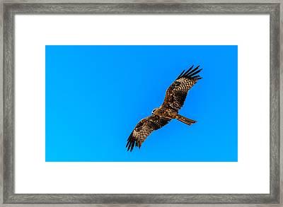 The Eagle Framed Print by Arjun Ramesh