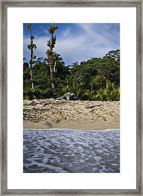 The Elements Of Life Framed Print by Sarita Rampersad
