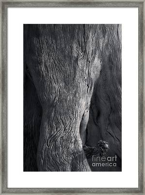 The Elephant Tree Framed Print by Royce Howland
