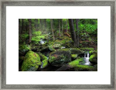 The Enchanted Forest Framed Print by Bill Wakeley