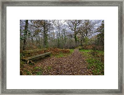 The Enchanted Forest Framed Print by Contemporary Art