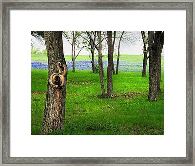 The Enchanted Forest Framed Print by David and Carol Kelly
