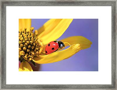 The End Framed Print by Donna Kennedy