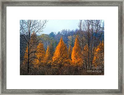 The End Of Another Season Framed Print by Robert Pearson