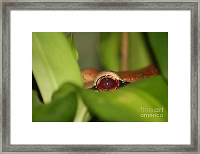 The Eye Of The Boa Framed Print by April Holgate