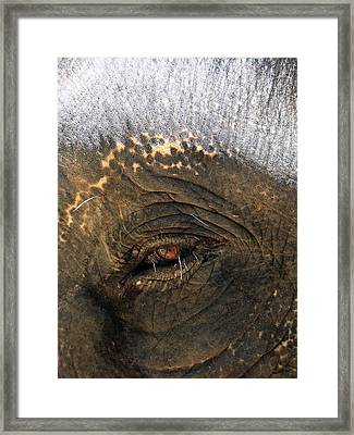 The Eye Of Wisdom Framed Print by Kelly Jones