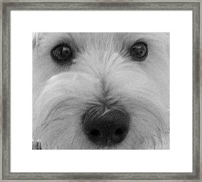 The Eyes Have It Framed Print by Ed Smith