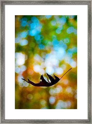 The Fall Framed Print by Ryan Heffron