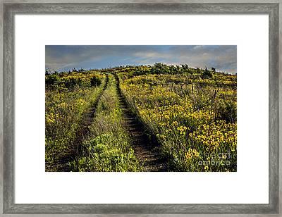 The Farmer's Road Framed Print by Tamyra Ayles