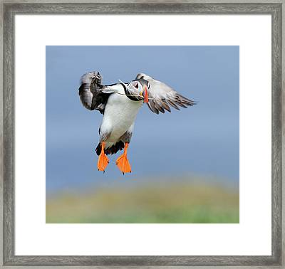 The Feather Framed Print by Harry Eggens