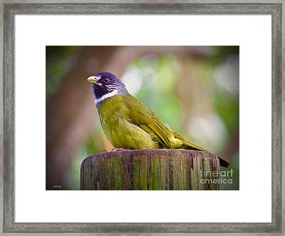 The Finchbill Framed Print by Judy Kay