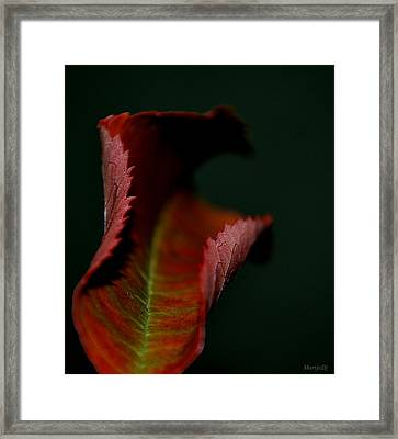 The First Day Of Fall Framed Print by Marija Djedovic