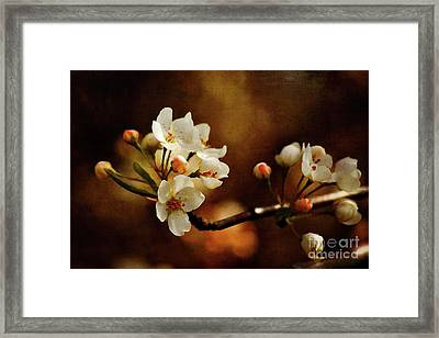 The Fleeting Sweetness Of Spring Framed Print by Lois Bryan