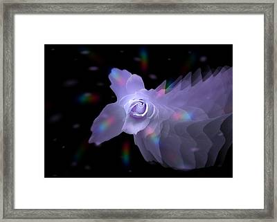 The Floral Dance Of Butterfly Rose - Periwinkle Framed Print by Jacqueline Migell