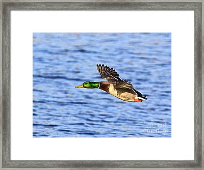 The Fly By Framed Print by Robert Pearson