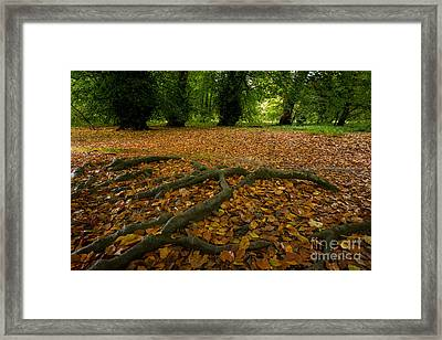 The Forest Floor Framed Print by Stephen Smith
