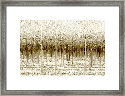 The Forest For The Trees Framed Print by Holly Kempe