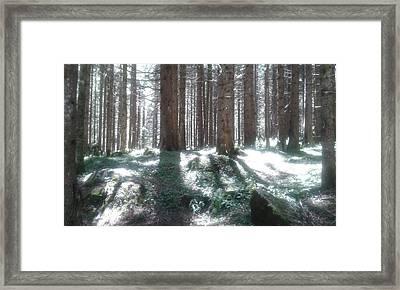 The Forest Lights Framed Print by Giuseppe Epifani
