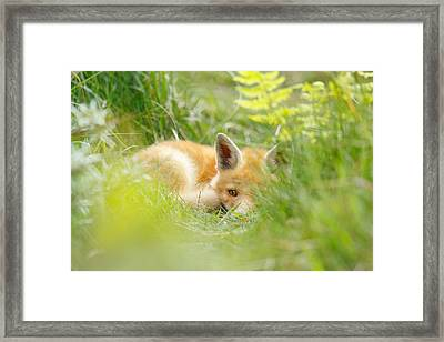 The Fox Kit And The Ferns Framed Print by Roeselien Raimond