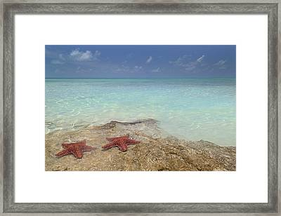 The Gate Keepers Framed Print by Betsy C Knapp