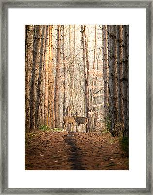 The Gift Framed Print by Everet Regal