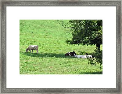 The Girls Hangout Framed Print by Jan Amiss Photography
