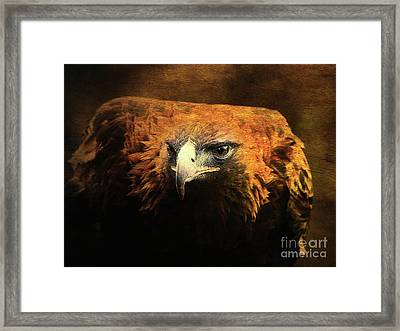 The Golden Hawk Locks On Target . R3593 Framed Print by Wingsdomain Art and Photography