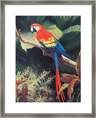 The Gossiper Framed Print by Laurie Hein