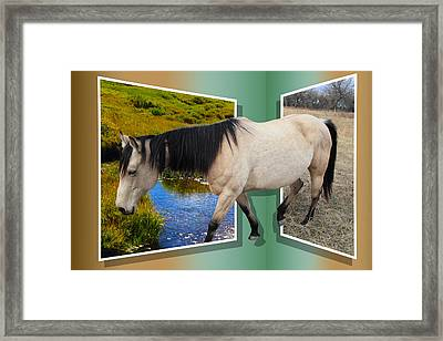The Grass Is Always Greener On The Other Side Framed Print by Shane Bechler