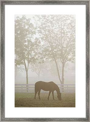 The Great Thoroughbred Gelding Forego Framed Print by Raymond Gehman