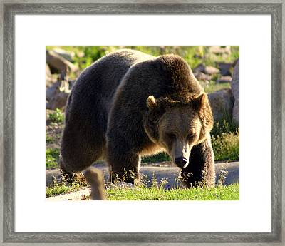 The Grizz Framed Print by Marty Koch