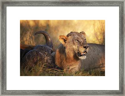 The Guardian Framed Print by Mario Moreno