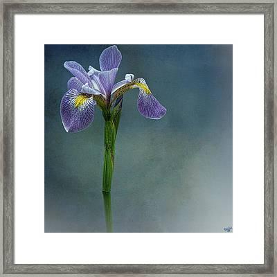 The Harlem Meer Iris Framed Print by Chris Lord
