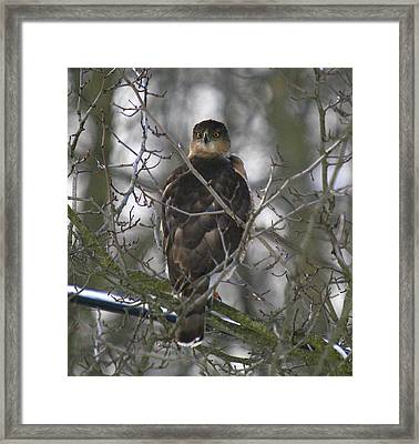 The Hawks Have Eyes Framed Print by Robert Pearson