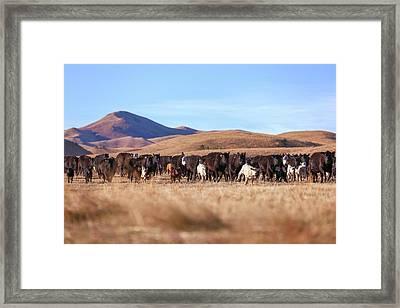 The Herd Races In Framed Print by Todd Klassy