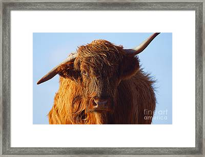 The Highland Cow Framed Print by Stephen Smith