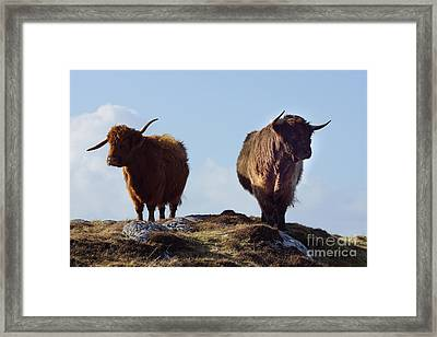 The Highland Cows Framed Print by Stephen Smith