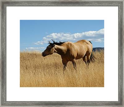 The Horse Framed Print by Ernie Echols