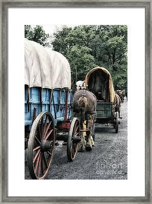 The Horse Train  Framed Print by Steven Digman