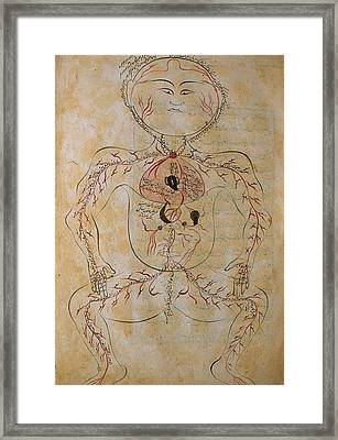 The Human Circulation System Framed Print by Everett