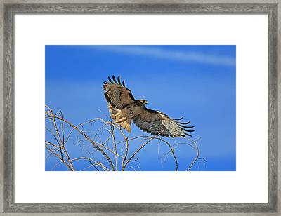 The Hunt Framed Print by Donna Kennedy