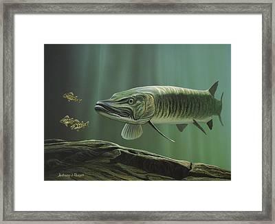 The Hunter - Musky Framed Print by Anthony J Padgett