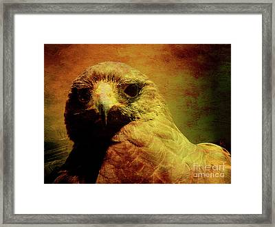 The Hunter . Portrait Of A Hawk . Texture . 40d7877 Framed Print by Wingsdomain Art and Photography