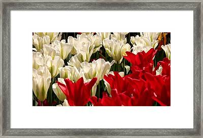 The Image Of A Tulip Framed Print by Lanjee Chee