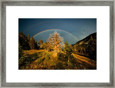 The Juniper's Last Crown Framed Print by Dan Holmes