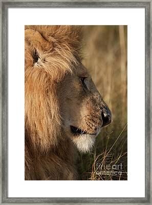 The King Framed Print by Stephen Smith