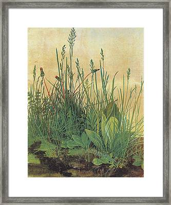 The Large Piece Of Turf Framed Print by Albrecht Durer