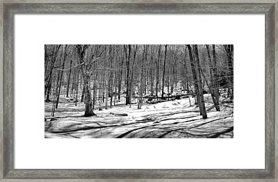 The Last Snow On The Maple Ridge Trail Framed Print by David Patterson