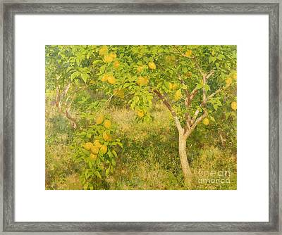 The Lemon Tree Framed Print by Henry Scott Tuke